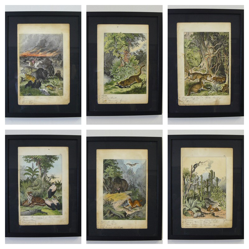 6 Framed Animal Coloured Pictures Plates C1877 -billy-hunt-befunky-collage-1-main-637426131869902782.jpg