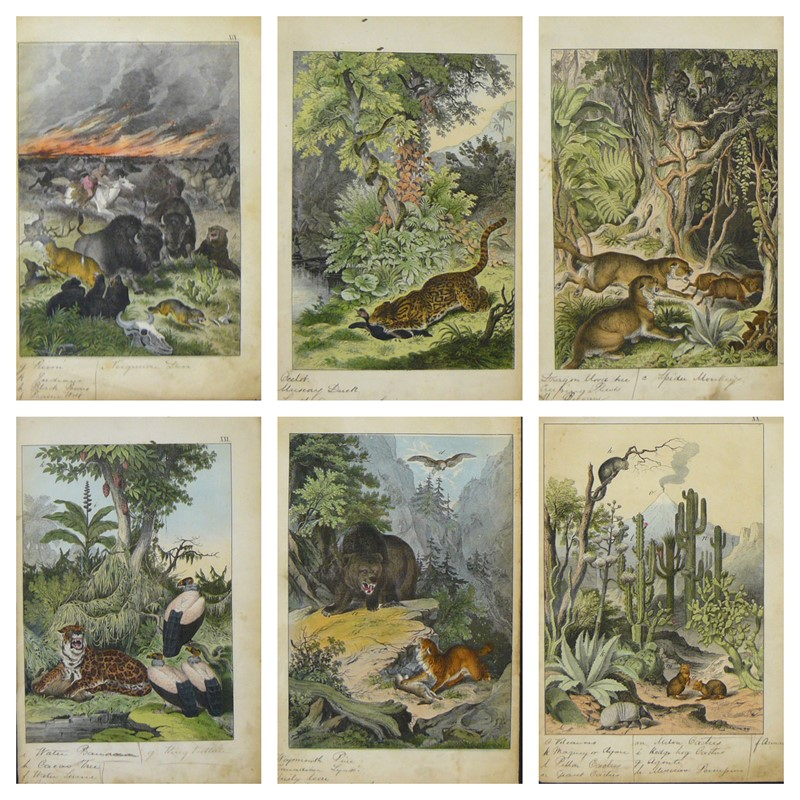6 Framed Animal Coloured Pictures Plates C1877 -billy-hunt-befunky-collage-3-main-637426132173809102.jpg