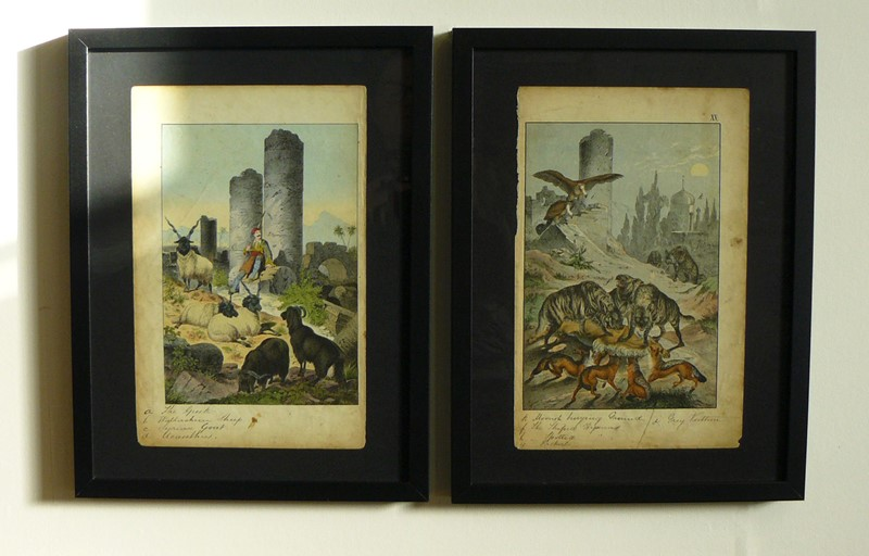 2 Framed Animal Coloured Pictures Plates C1877 -billy-hunt-pictures-from-nature-greece-0000-p1340454-main-637079599547169357.jpg