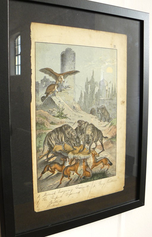 2 Framed Animal Coloured Pictures Plates C1877 -billy-hunt-pictures-from-nature-greece-0003-p1340450-main-637079599332941191.jpg