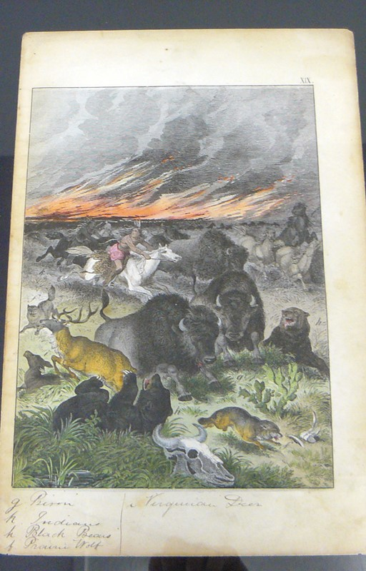 6 Framed Animal Coloured Pictures Plates C1877 -billy-hunt-sketches-from-nature-north-america-0012-p1410056-main-637426132749587270.jpg