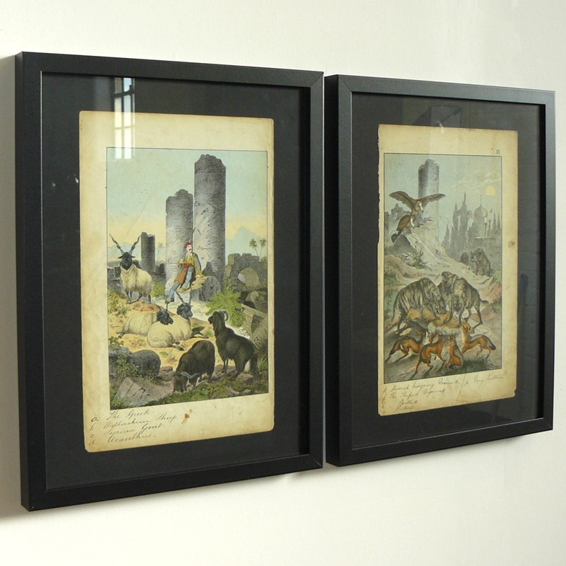 2 Framed Animal Coloured Pictures Plates C1877 -billy-hunt-the-hoardew-pictures-from-nature-greece-square-main-637079599163255321.jpg