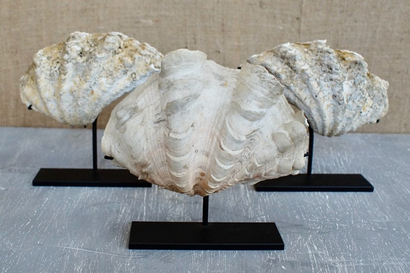 Antique Clam Shells On Stand-clubhouse-interiors-ltd--dsc2308-main-637333458755299447.jpeg