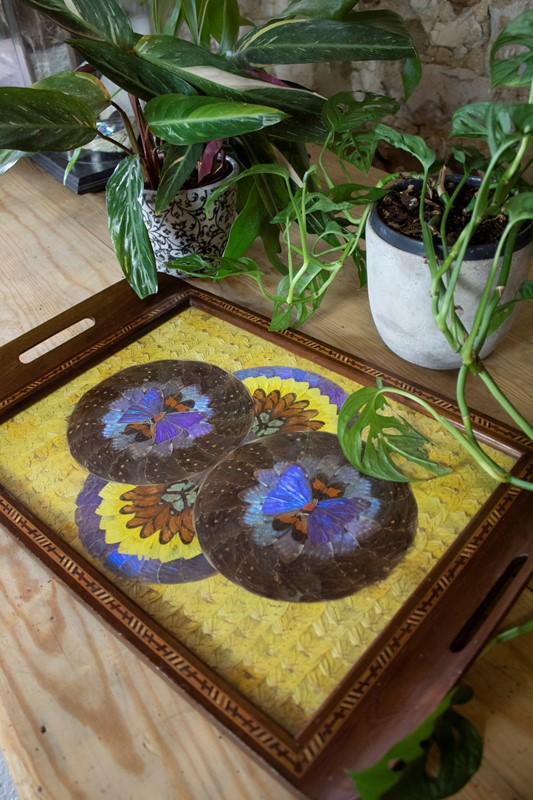 Glazed Tray with Butterflies-corvus-antiques-img-4057-main-637352650554644907.jpg