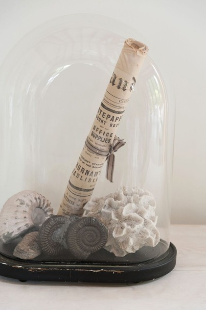 Vintage Display Dome with Fossil collection-decorative-antiques-uk-Fos2_main_636011031551867239.jpg
