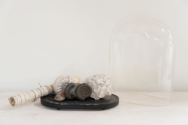 Vintage Display Dome with Fossil collection-decorative-antiques-uk-Fos4_main_636011031839077967.jpg