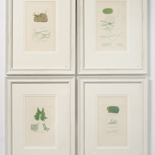 Antique original seaweed hand coloured prints