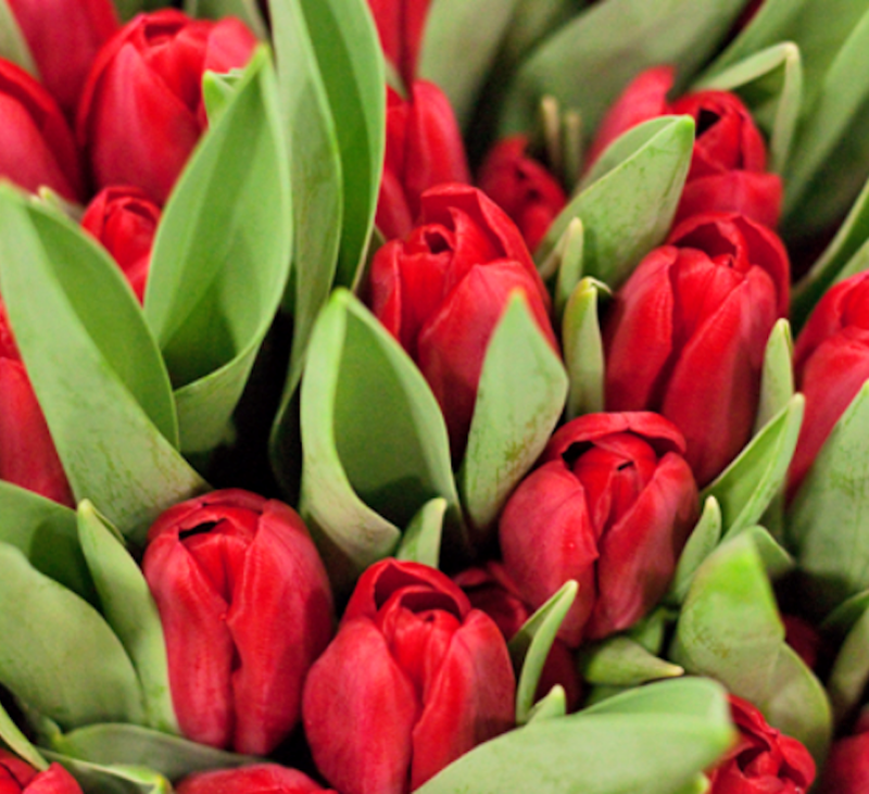 4 Flower Market Delivery Crates -eco-editions-bing-crosby-tulips-main-637248148576181573.png