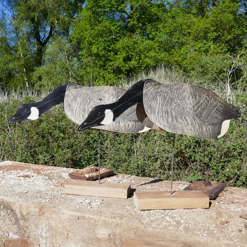 A Pair of Flying Geese Decoys on oak plinths-eco-editions-goose-32-main-637255034062460891.jpg