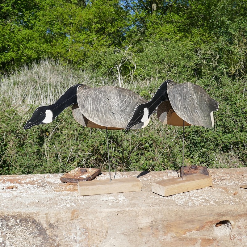 A Pair of Flying Geese Decoys on oak plinths-eco-editions-goose-34-main-637255034848913461.jpg