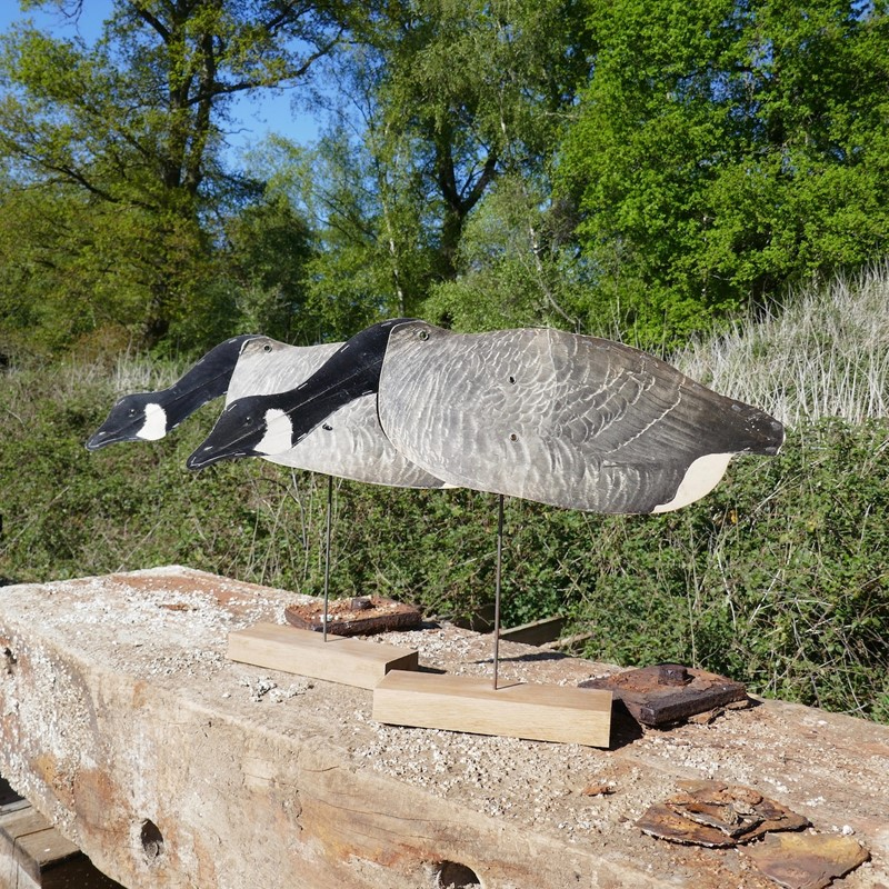 A Pair of Flying Geese Decoys on oak plinths-eco-editions-goose-36-main-637255034970162473.jpg