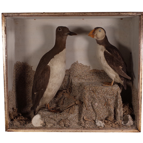Cased Taxidermy Birds