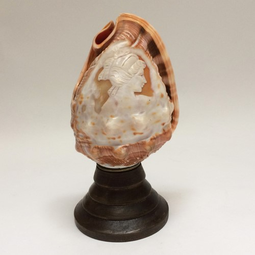 Carved Conch Shell Lamp