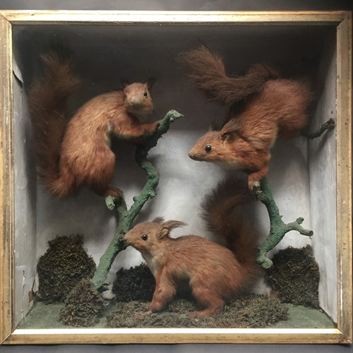 Victorian Red Squirrels In A Glazed Case
