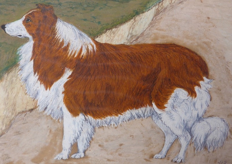 19th Century Painting of a Rough Collie Called Tip-ginger-tom-s-curious-eclectic-ce535f-hoarde-main-637382762434700702.JPG