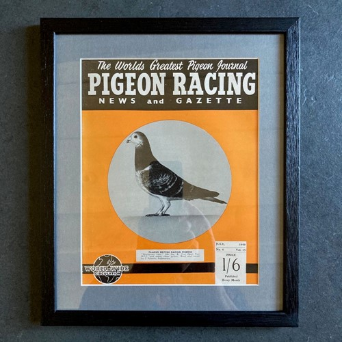 Vintage racing pigeon print - 'Brangreen Lass' No.