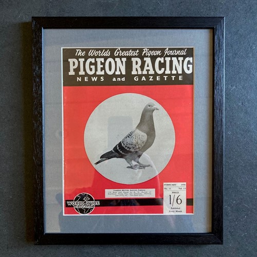 Vintage racing pigeon print - 'Murray' No.11
