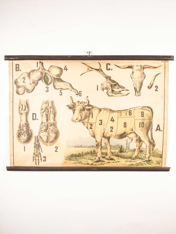 Early 20th Century Butchering Chart -merchant-found-345-main-637123436154535781.jpg