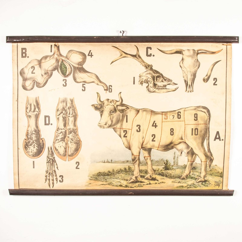 Early 20th Century Butchering Chart -merchant-found-345y-main-637123435970161558.jpg