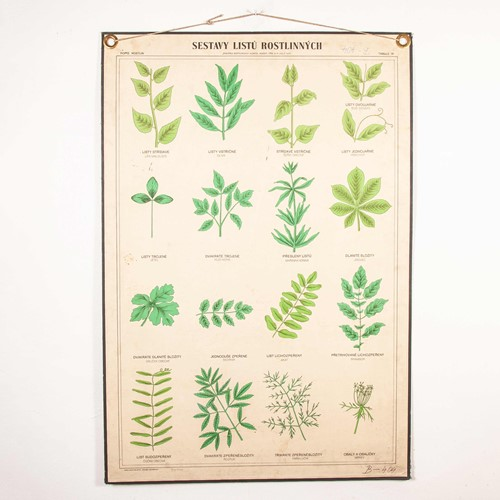 Early 20th Century Chart - Rigid Chart Plants