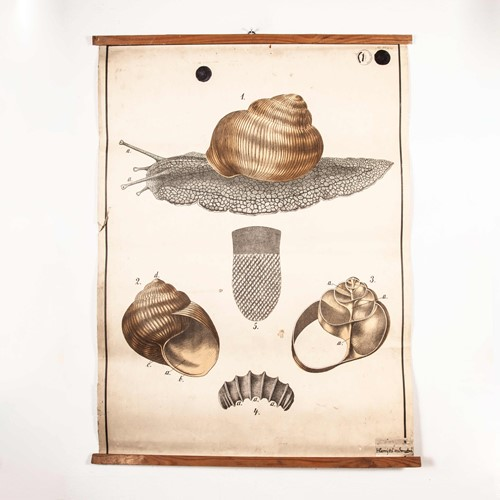 Early 20th Century  Chart Garden Snail