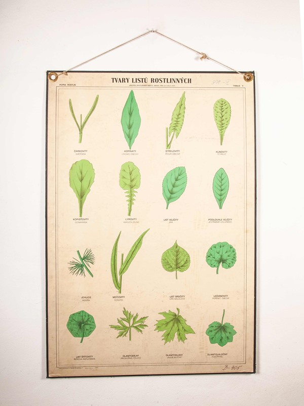 Early 20th Century Rigid  Botanical Chart-merchant-found-71225-main-637123483198287575.jpg