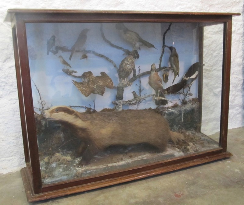Large Victorian taxidermy display-mole-vintage-IMG_3471-main-636675240430783729.jpg