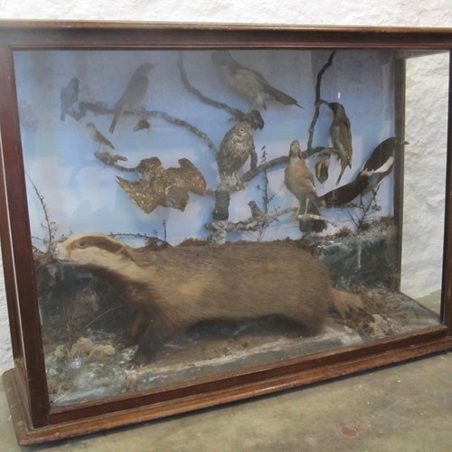Large Victorian taxidermy display