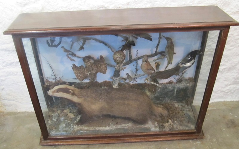 Large Victorian taxidermy display-mole-vintage-IMG_3477-main-636675240819867681.jpg