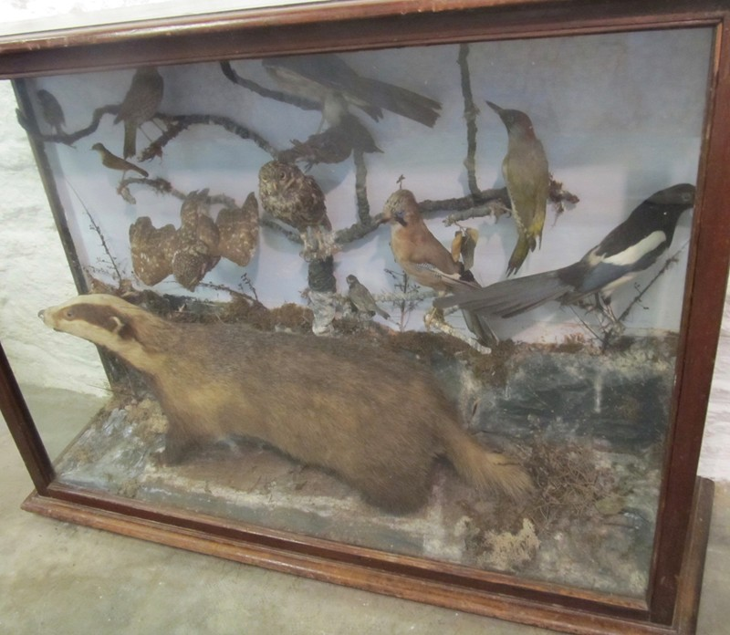Large Victorian taxidermy display-mole-vintage-IMG_3479-main-636675242115514121.jpg