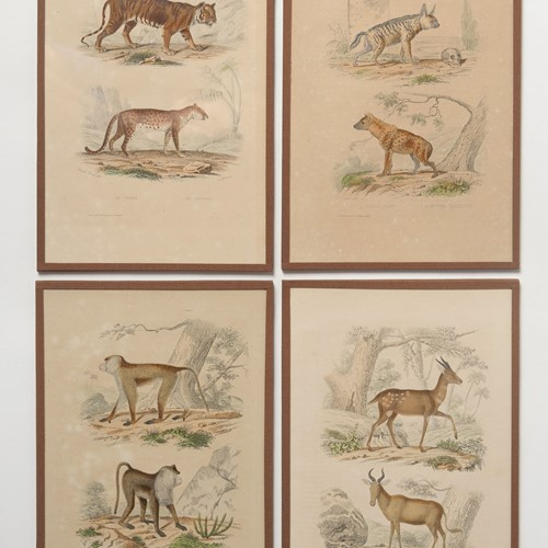 Set of four antique French prints