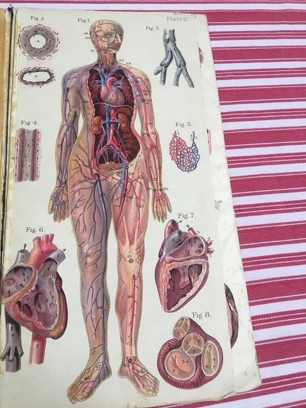 Anatomy of female body book - exceptional plates -sandie-lewis-antiques-and-interiors-5b8a249c-15cd-4102-8075-0a6ba963c2c6-main-637314572007376330.jpeg