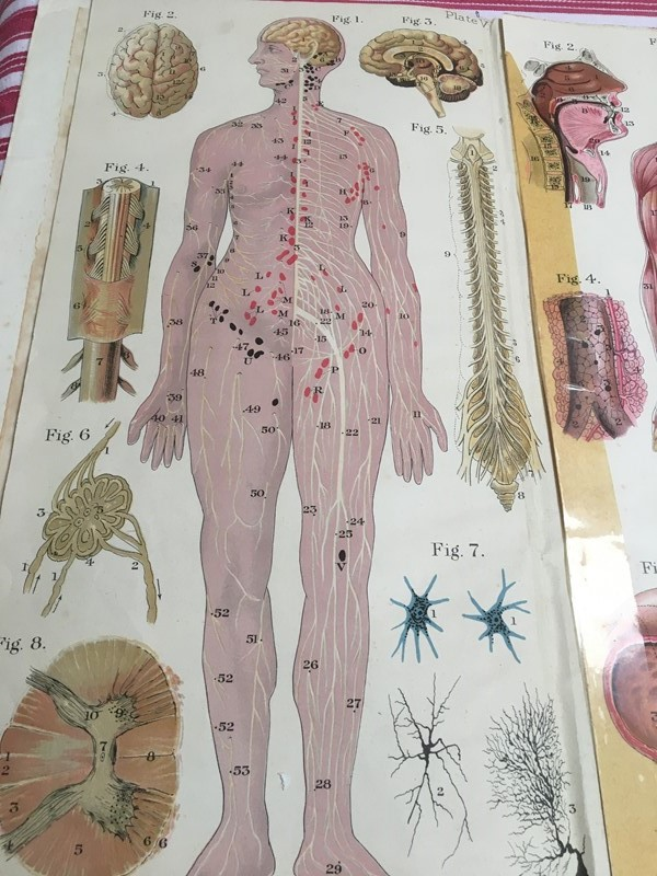 Anatomy of female body book - exceptional plates -sandie-lewis-antiques-and-interiors-804890f6-fd85-498e-9ef8-8903aaef3c36-main-637314572036126639.jpeg