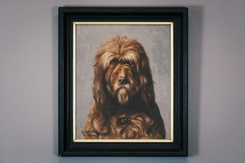 Engaging Grumpy Oil on Canvas Dog Portrait-the-home-bothy-201910085dm34362-main-637066541177448063.jpg
