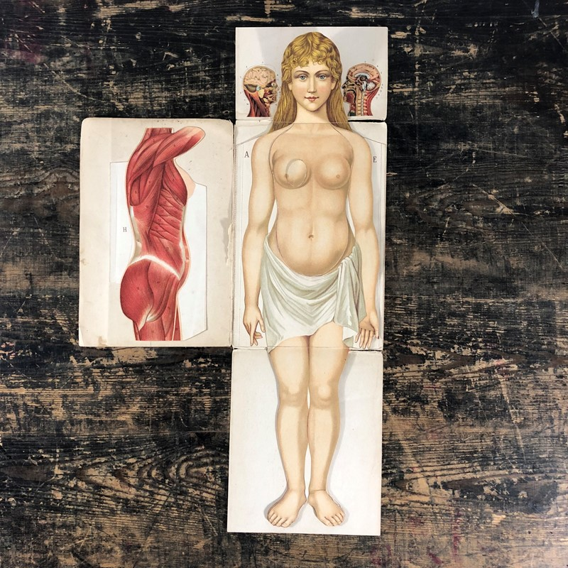 An antique pop up anatomical female diagram-the-mint-in-rye-img-1296-main-636836066062305201.jpeg