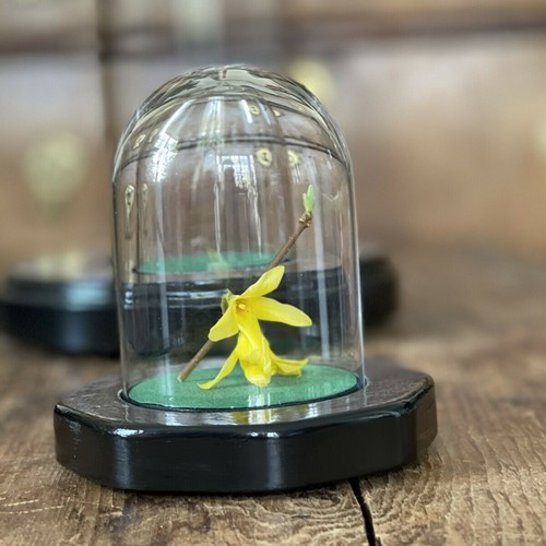 Mini vintage glass dome